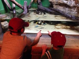 Enjoy time at the Adventure Aquarium