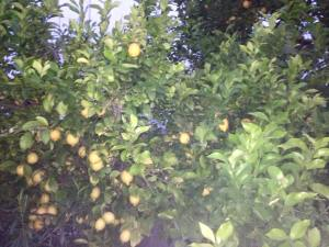 Citrus trees and the smells in the air were incredible