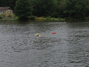 Some folks taking part in the open swim that was available before the race the next day.